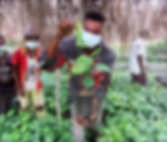 Faja Lobi Tree planting, rainforest, forestation, africa, Kongo, plan a tree
