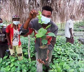 Faja Lobi Tree planting, rainforest, forestation, africa, Kongo, plan a tree