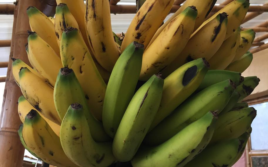 Colombian bananas