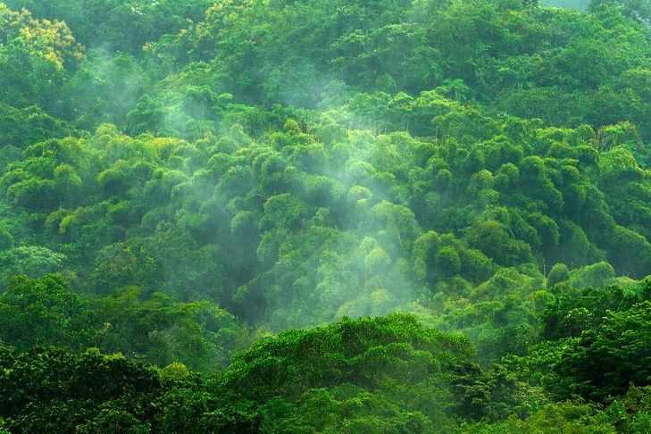 Tropica Rainforest Kongo, second largest rainforest in the world