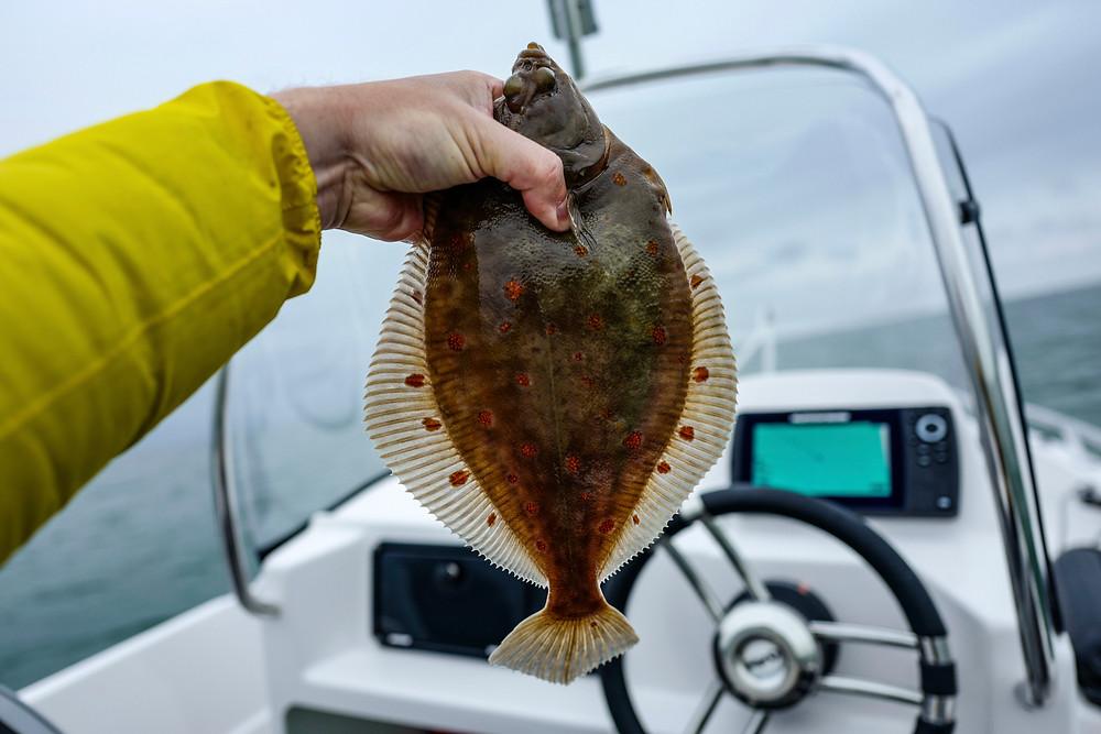 Plattfisch Fliegenfischen Plattfisch auf Fliege