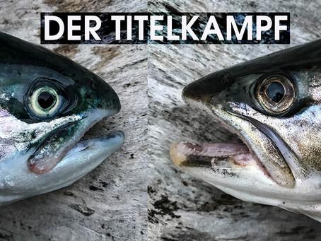 """""""Ostseesteelhead"""" vs. Meerforelle"""