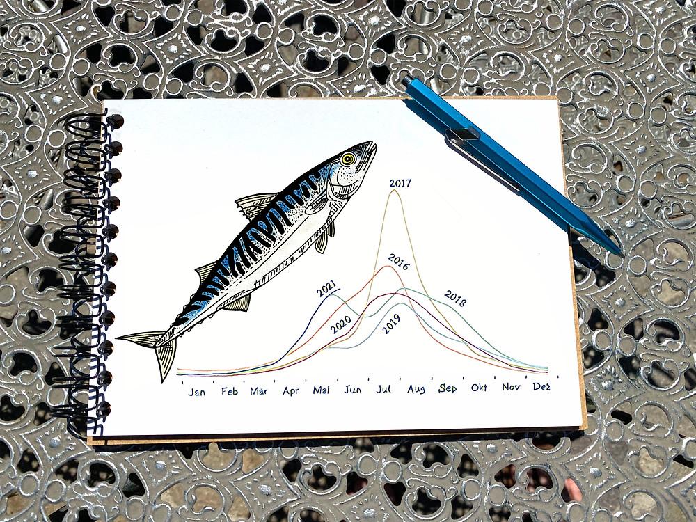Makrele Fangbericht