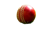 cricket-1513138-1600x1200_edited.png