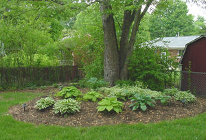 New Holz - Hosta Garden.jpg