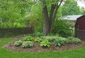 New Holz - Hosta Garden.jpg