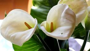 Beauté des fleurs et joie de l'Esprit
