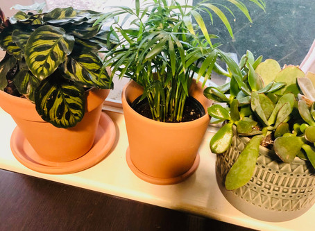 Welcome to the Plant Family!