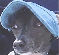 Gracie the Italian Greyhound Service Dog, Diane Dike