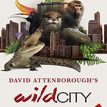 wild city .jpeg
