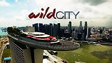 wild city 2.jpeg