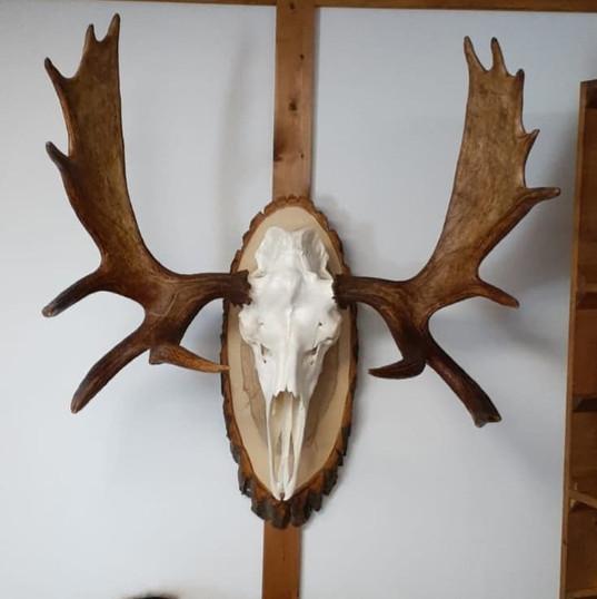 Crâne blanchis