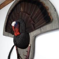 queue de dindon sauvage/d turkey