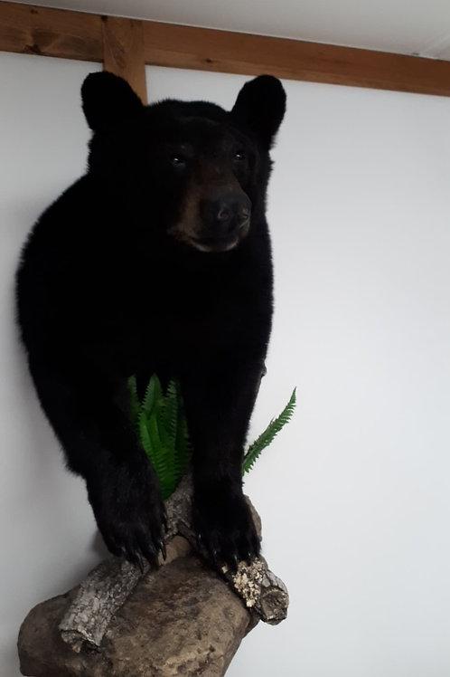 ours naturalisé