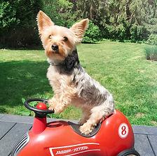 Duffy Fitz Canine