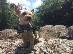 Fitz Canine Duffy