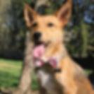 Rebel Fitz Canine