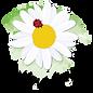 cropped-Logo-512x512-1-e1585389186977-2.