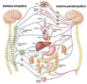 KINESIOLOGIA INEGRATA ALLE TECNICHE MANUALI OSTEOPATICHE 1