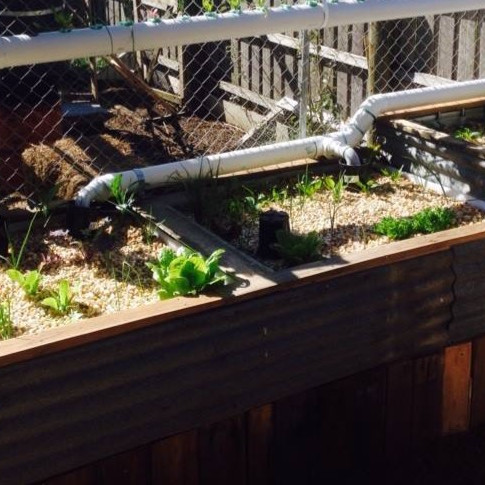 Aquaponics- learn how to grow fish and plants together.