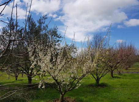 Lillico Garden