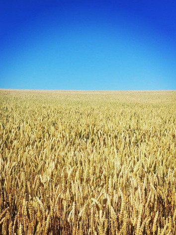 Wheat Field, Oxfordshire.jpg