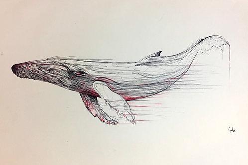 La baleine  rose