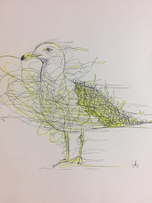 Le goéland  jaune