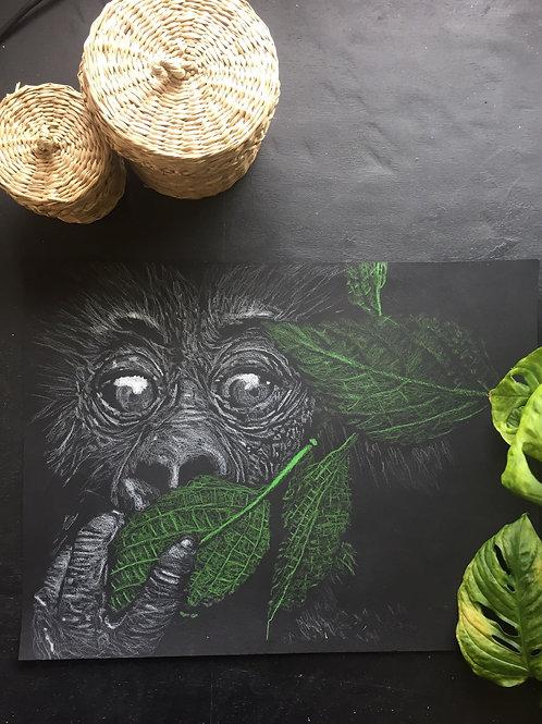 Le Bébé gorille