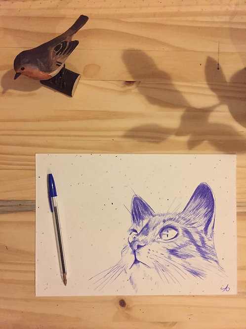 Le chat sur papier graines