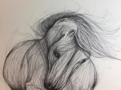 Le cheval Gribouillis