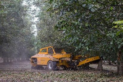 3WMB-walnut-shaking-600x403.jpg