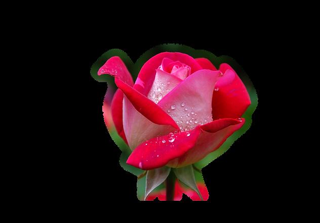 Yvette Rose Logo High Res.png