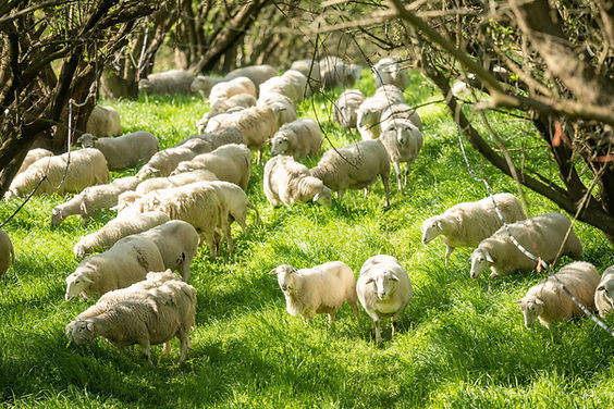 Burroughs_Family_Farms_0223.jpg