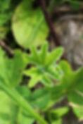 macro fleurs, plantes, insects gouttes de rosée