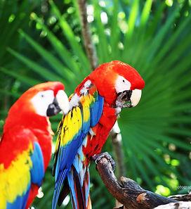 perroquets multicouleur, plantes, photos artistiques