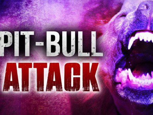 Pit bull attack leaves 4 injured in Middlesboro