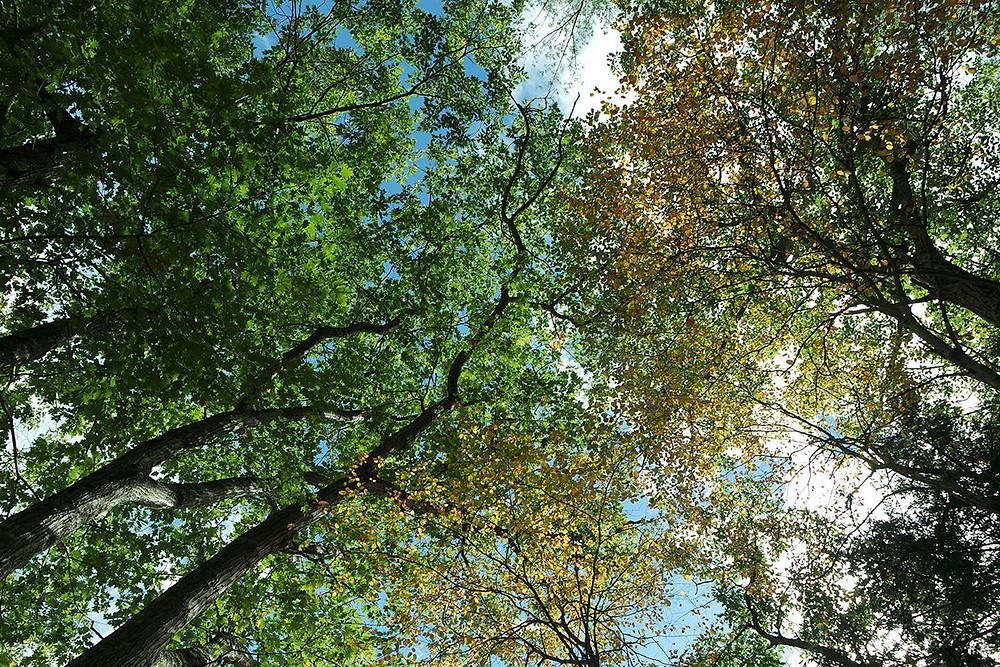 היערות של ניו אינגלנד