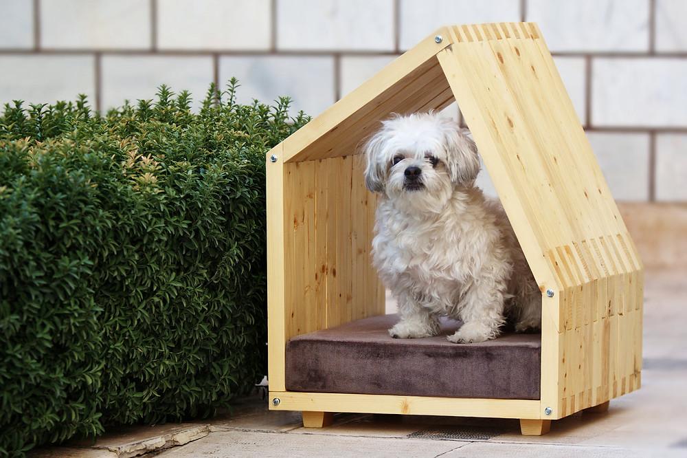 Lida Studio Doghouse