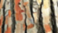 nature-3227247_960_720.jpg