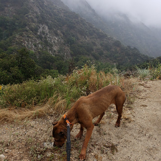 Dog Hiking = Lot's of Sniffing!