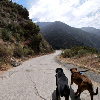 They Make Dog Hiking Look Easy!