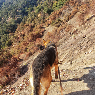 Dog Walks Are So Mundane. Let's Hike!