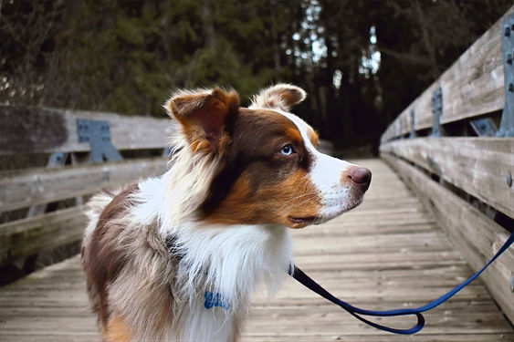 Dog Hiking Services in Los Angeles