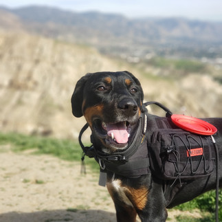 Dog Hiking with a Trekking Pack