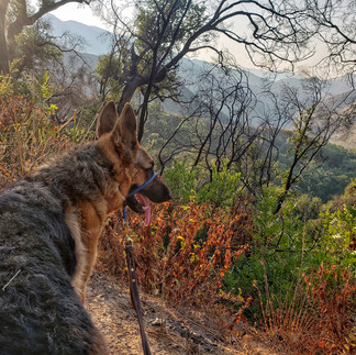 Dog Adventures = Remote Exploring