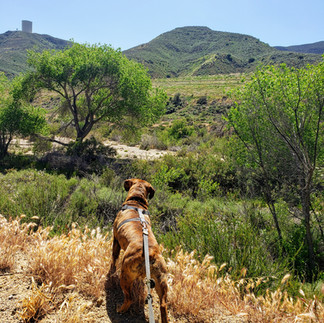 Dog Hiking, and Then Some!