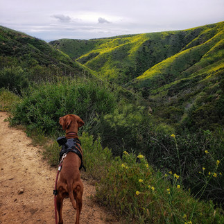 Dog Adventures in Malibu!