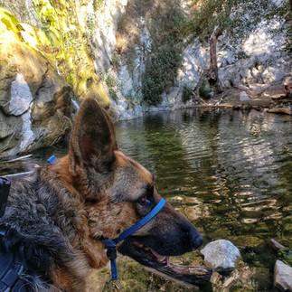 Forget a Dog Walk, Let's Hike!