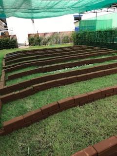 Growing Food: New beginnings